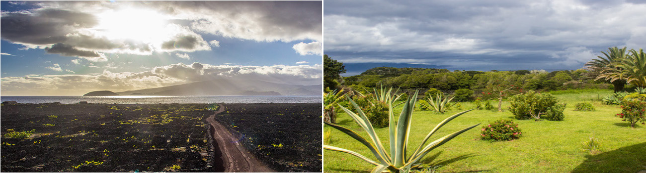 Pico-Azores-Islands-Portugal-Vineyards-and-Palm-Tree-2Panels-Itinerary