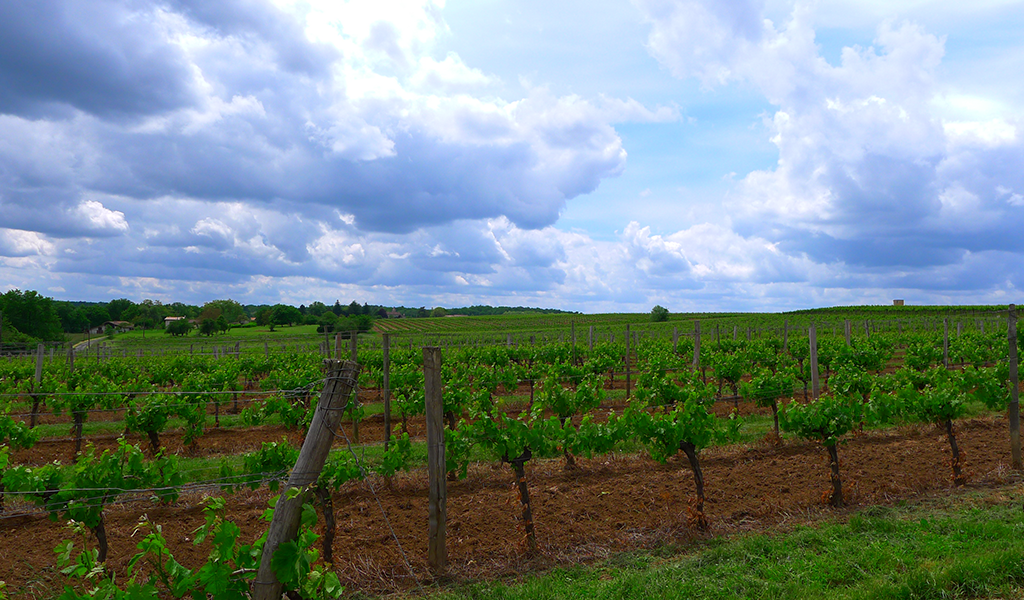 Photo-Vineyard-Bordeaux