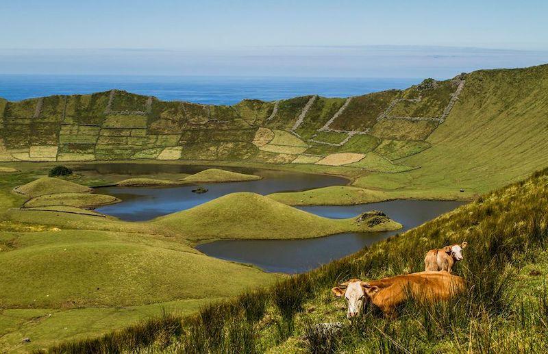 Corvo.Island-Azores-Crater-Lake-Cows