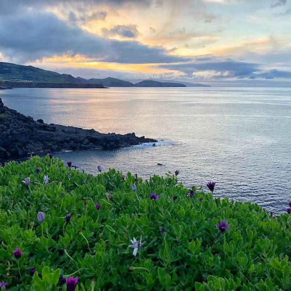 Azores-Sao-Miguel-North-Coast-Purple-Flowers