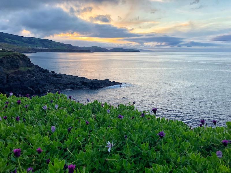 Azores-Sao-Miguel-North-Coast-Purple-Flowers