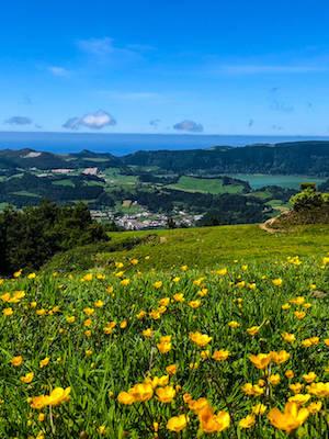 Furnas-Sao-Miguel-Azores-Wildflowers