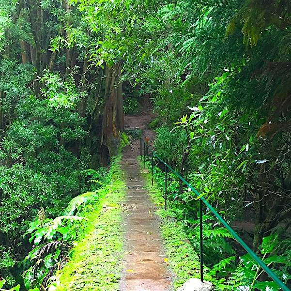 Azores-Hike-Rain-Wet-Weather-in-January-Forest-Bridge