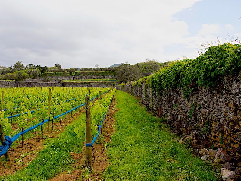 Azores-Sao-Miguel-Quinta-da-Jardinete-Winery-October