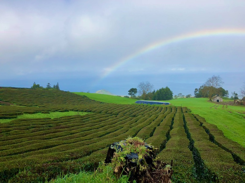 Azores-Sao-Miguel-Tea-Plantation-Rainbow