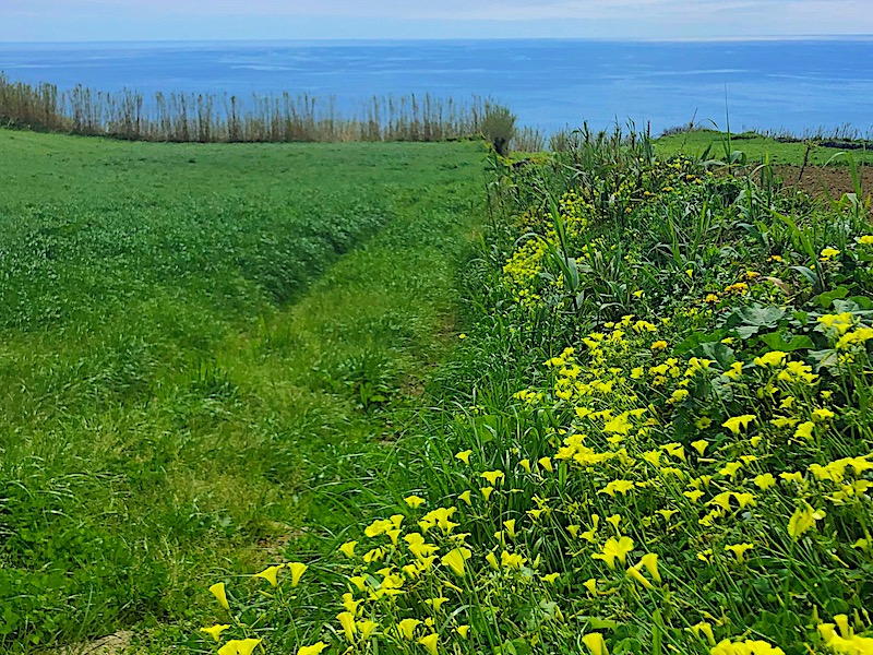 Best-Time-to-Visit-Azores-for-Wildflowers-Sao-Miguel