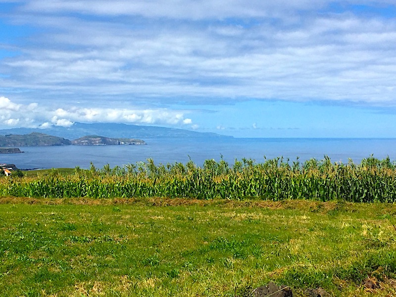 Corn-ocean-view-Sao-Miguel-Azore-Hike