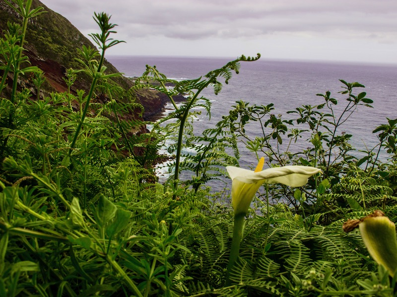 Flower-on-Altalho dos Vermelhos-Hike-Sao-Miguel-Azores