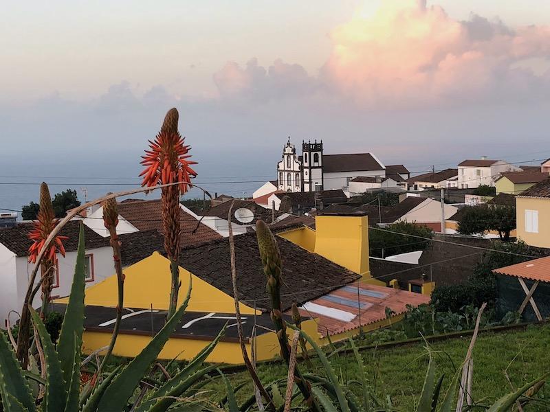 Red-Hot-Poker-Sao-Roque-Sao-Miguel-Azores