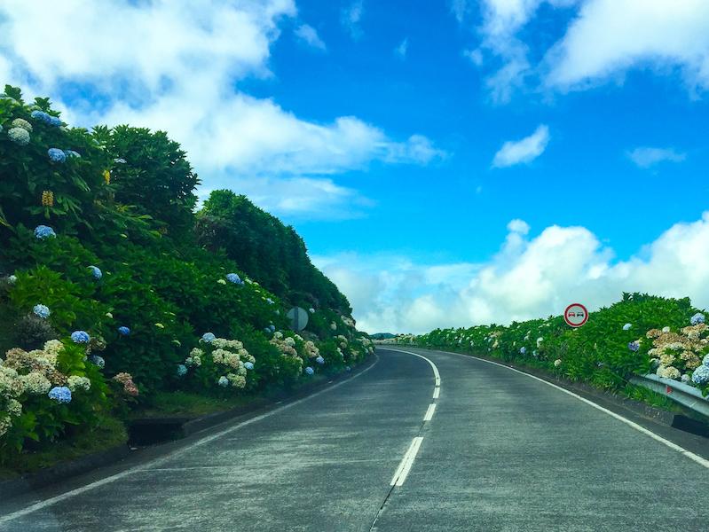 Road-Hydrangeas-Sete-Cidades-Sao-Miguel-Azores